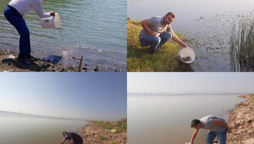 94 bin adet sazan balığı yavrusu göletlere bırakıldı