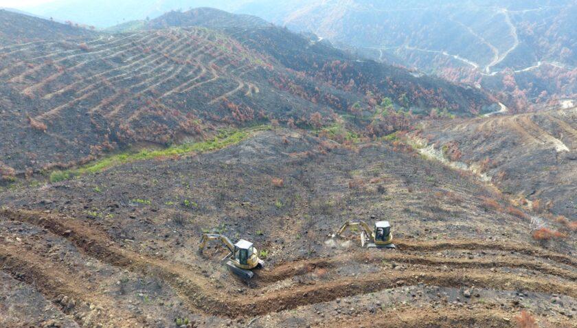 Şimdiden 50 hektarı fidan dikimine hazırladık